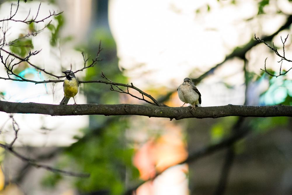 Endcliffe Birding_07.jpg
