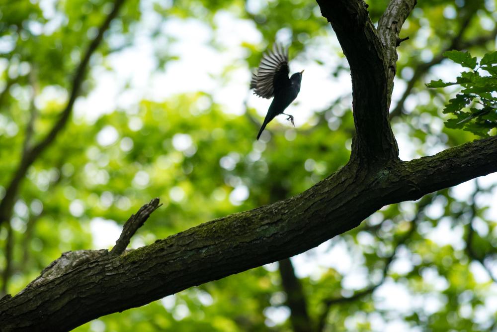 Endcliffe Birding_06.jpg