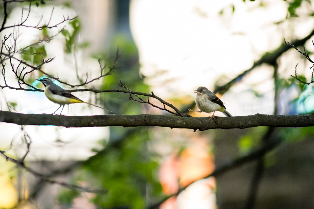 Endcliffe Birding_08.jpg