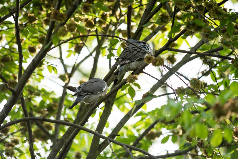 Endcliffe Birding_09.jpg