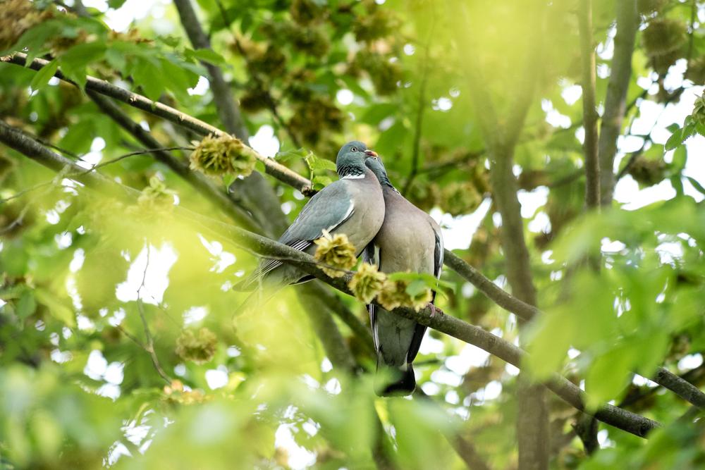 Endcliffe Birding_10.jpg