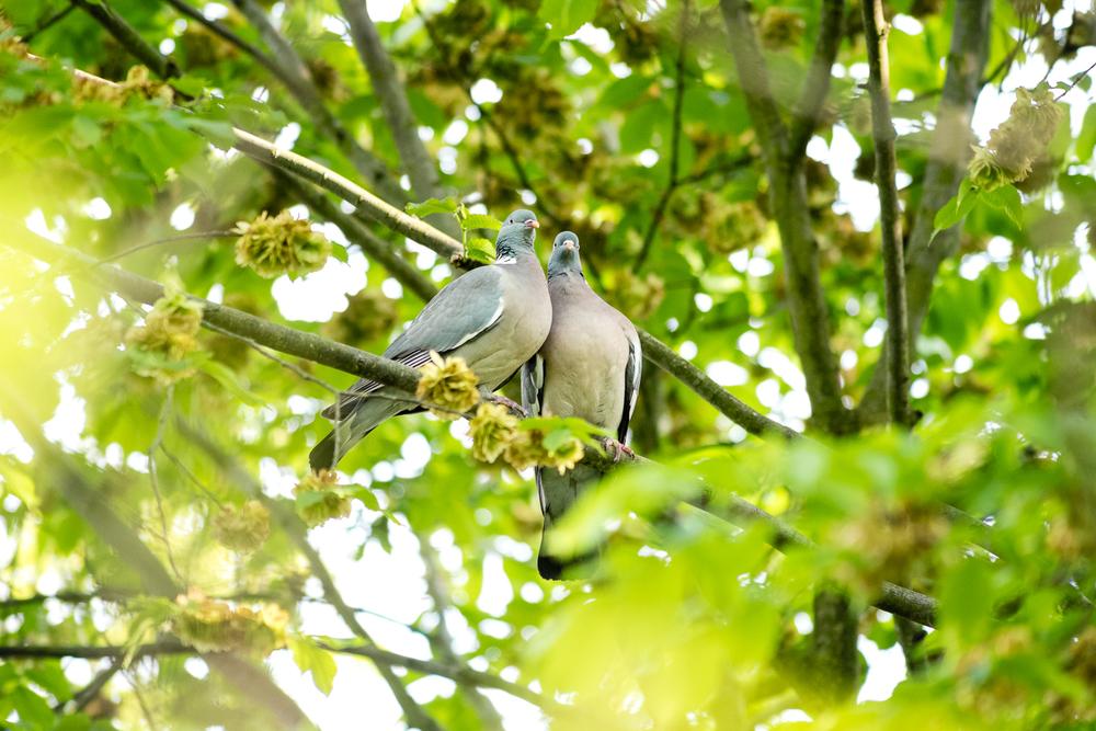 Endcliffe Birding_12.jpg