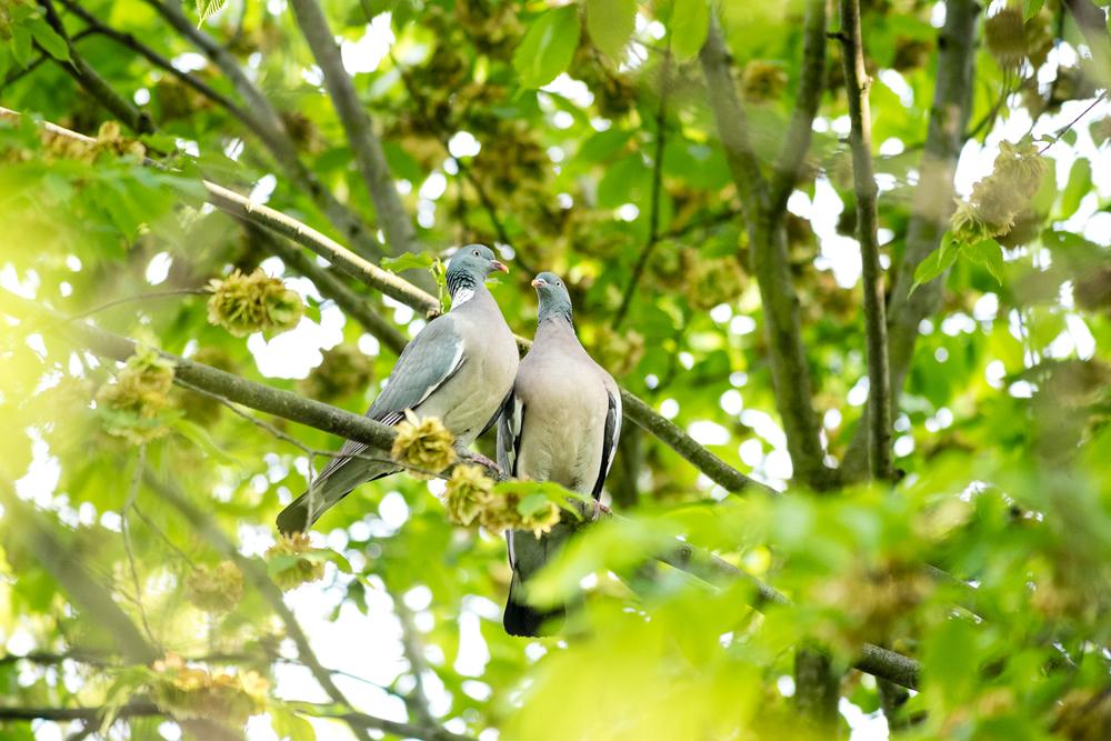 Endcliffe Birding_13.jpg