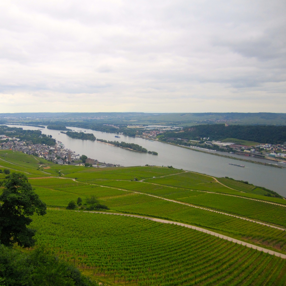 Overlooking the Rhine river