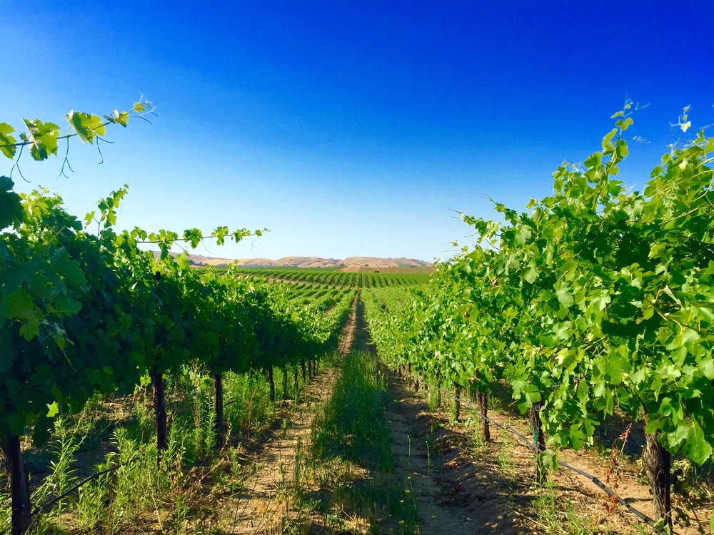 paso-robles-california-vineyard.jpg