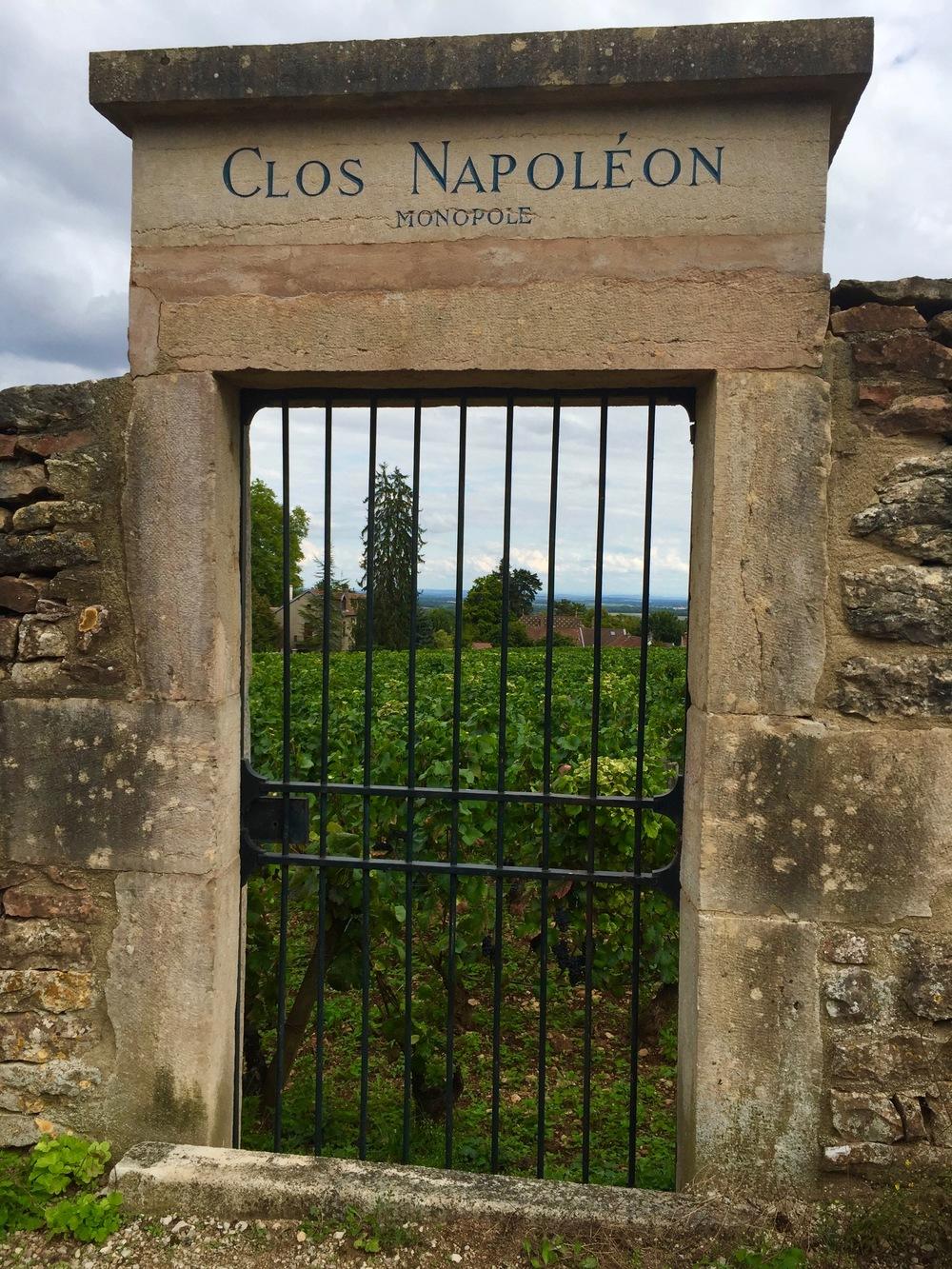 Clos Napoléon, Fixin