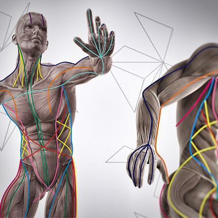 anatomytrains.jpg