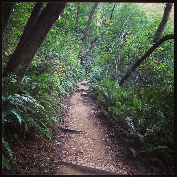 Mid-day escape to Muir Woods. Nature- you complete me;)