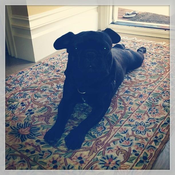 He waits so patiently in between yoga classes:)