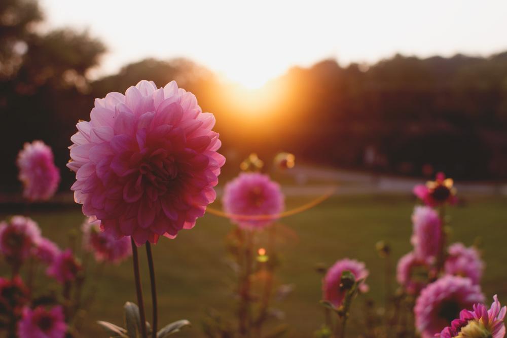flower-sunset.jpg