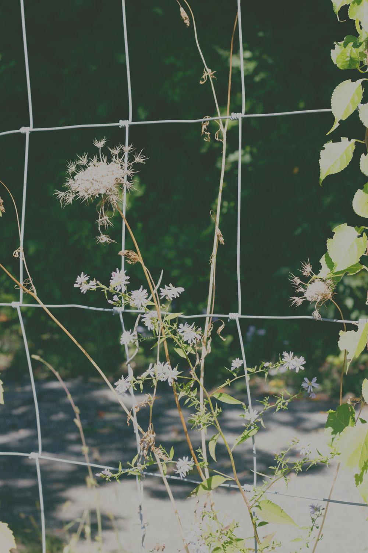 wire_fence_maude.jpg