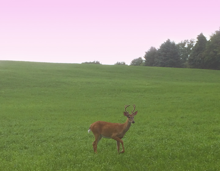 sunset-deer.jpg
