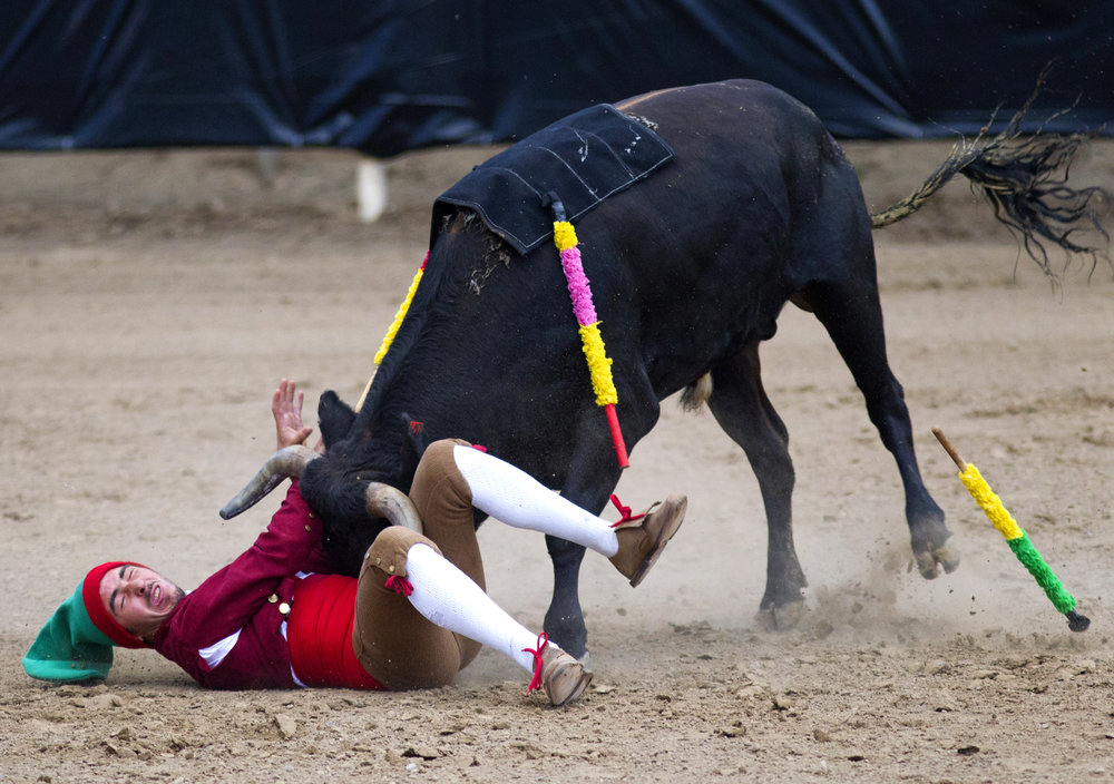 Joao 'Cafe' Azevedo, team captain of the Forcados Amadores, gets trampled as he tries to stop a bull Friday, Aug. 11, 2017, during the Bloodless Bullfight event at the Jerome County Fair in Jerome Idaho. Members of the Forcados Amadores would line up and try to stop a charging bull with the combined weight of their bodies.