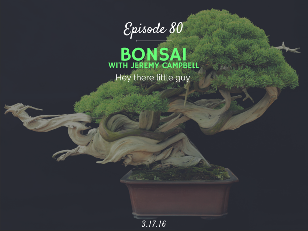 how to bonsai interview