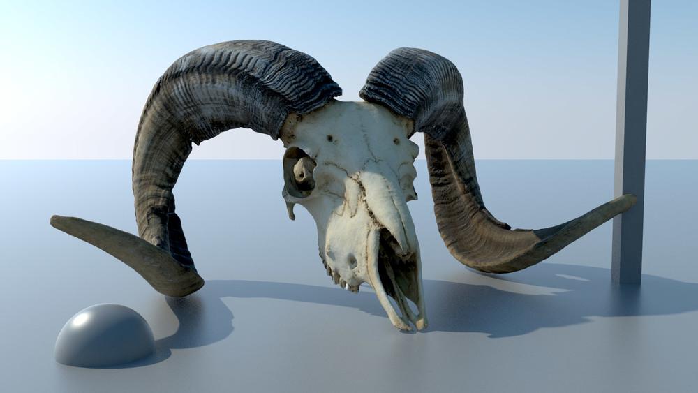 Skull_Ram_A.jpg