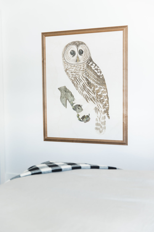 Owl Art || Studio McGee
