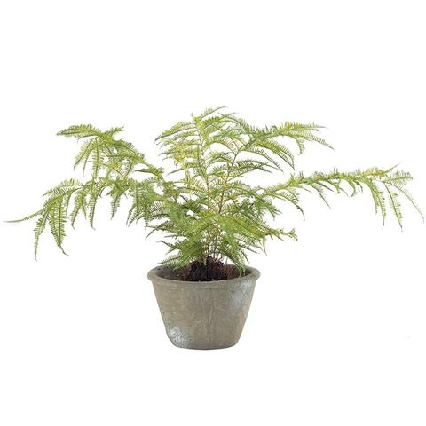 Faux Mountain Fern