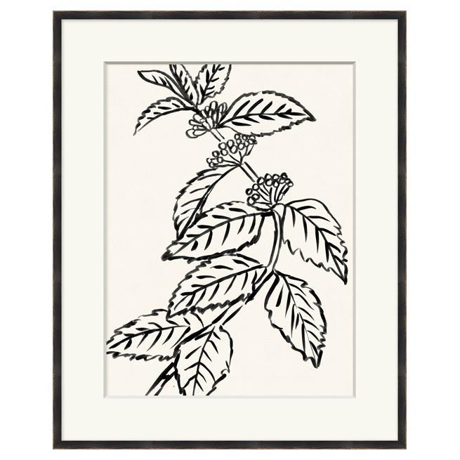 Black_and_White_Botanicals_4.jpg