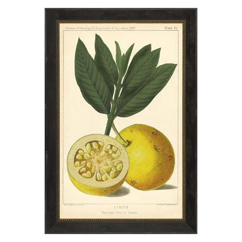 Lemon_Print_1_large.jpg
