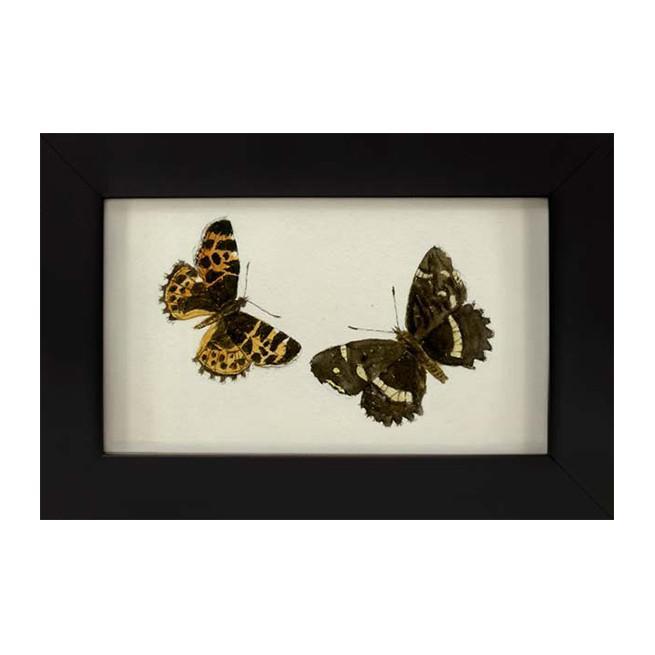 Hubbard_Butterfly_2.jpg