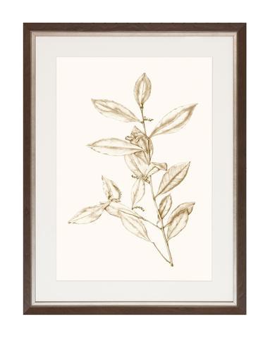 Sepia_Botanicals_1_1_480x480.jpg