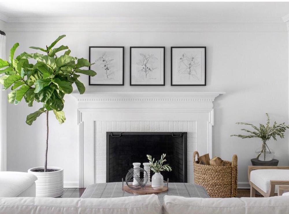 Botanicals - By Ursino Interiors