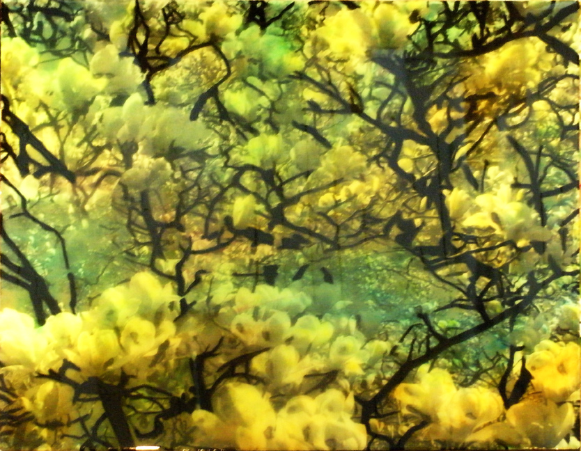 deroux_green-yellow_magnolias.jpg