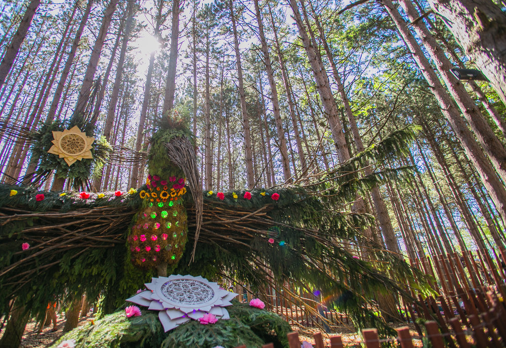 Electric Forest 2017 - Mike Schwarz_-3.jpg
