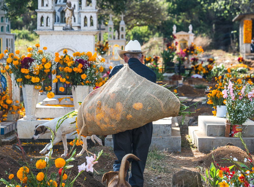 11/1/17 - A man carries a bag of freshly picked marigolds through the cemetery.