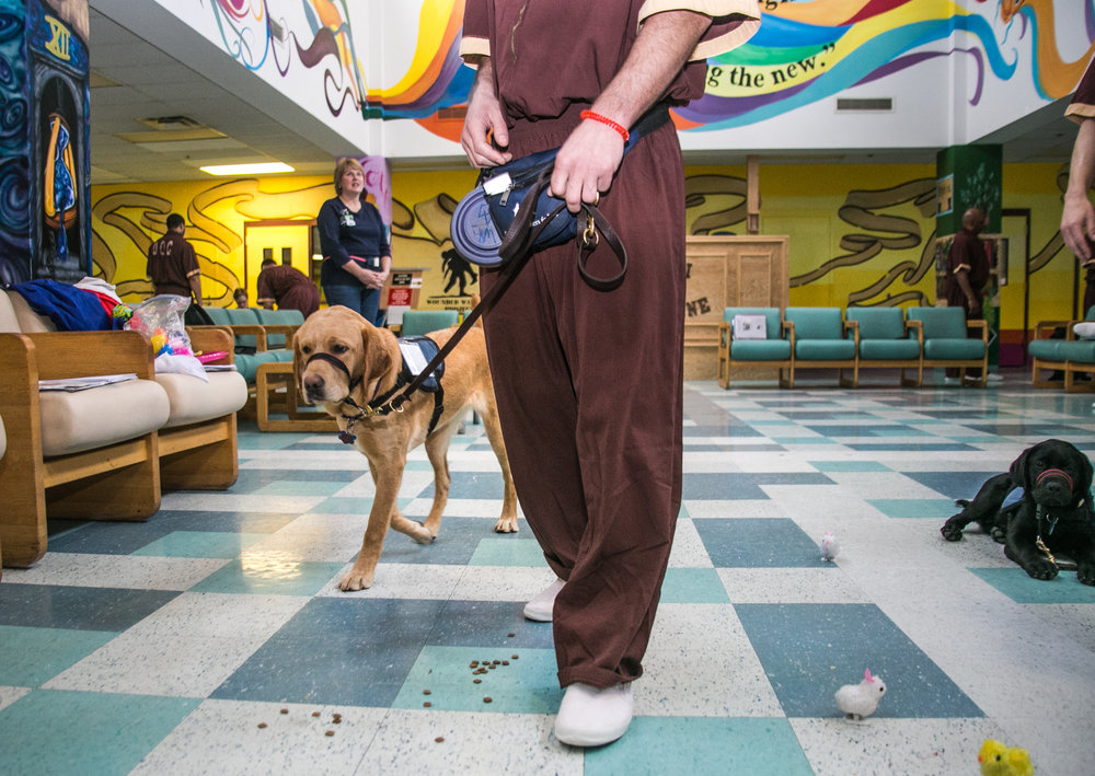 Cassidy, a trainee of the Canine Partner's for Life program at SCI Greene Maximum Security Prison, practices tasks with her handler during a rigorous training session.