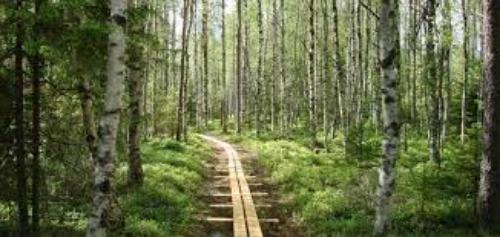 Byamossarna iArvika - vandra i naturreservatet som beskyddas av prinsparet.