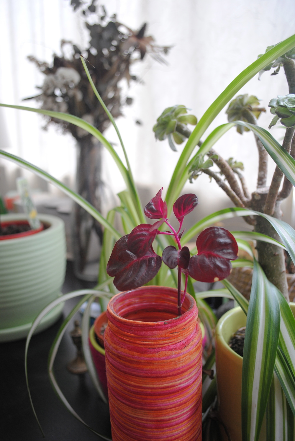"One of Kylie's ""wrappings"" over a jar - now housing a plant"