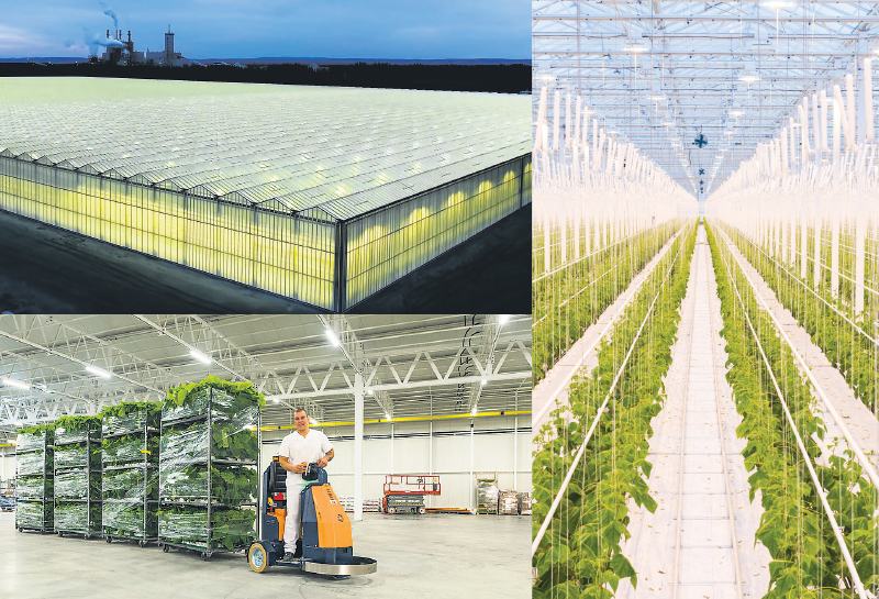 Inaugurated in December 2016, the Toundra Greenhouse currently covers 8.5 hectares, employs over 100 workers and produces 45 million cucumbers per year. The facility benefits from excess heat from the adjacent Resolute Forest Products pulp mill. Toundra Greenhouse