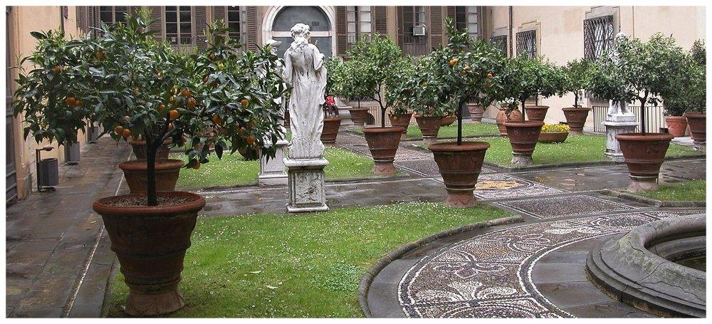 Orangers   - Jardin clos du Palazzo Medici-Riccardi à Florence.