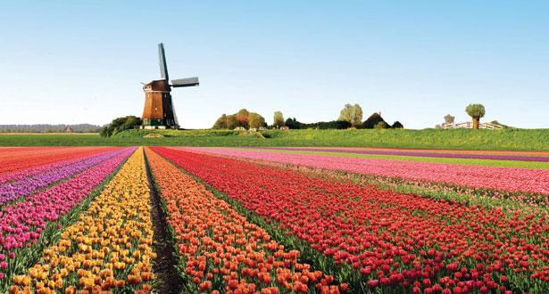 Holland2013.jpg