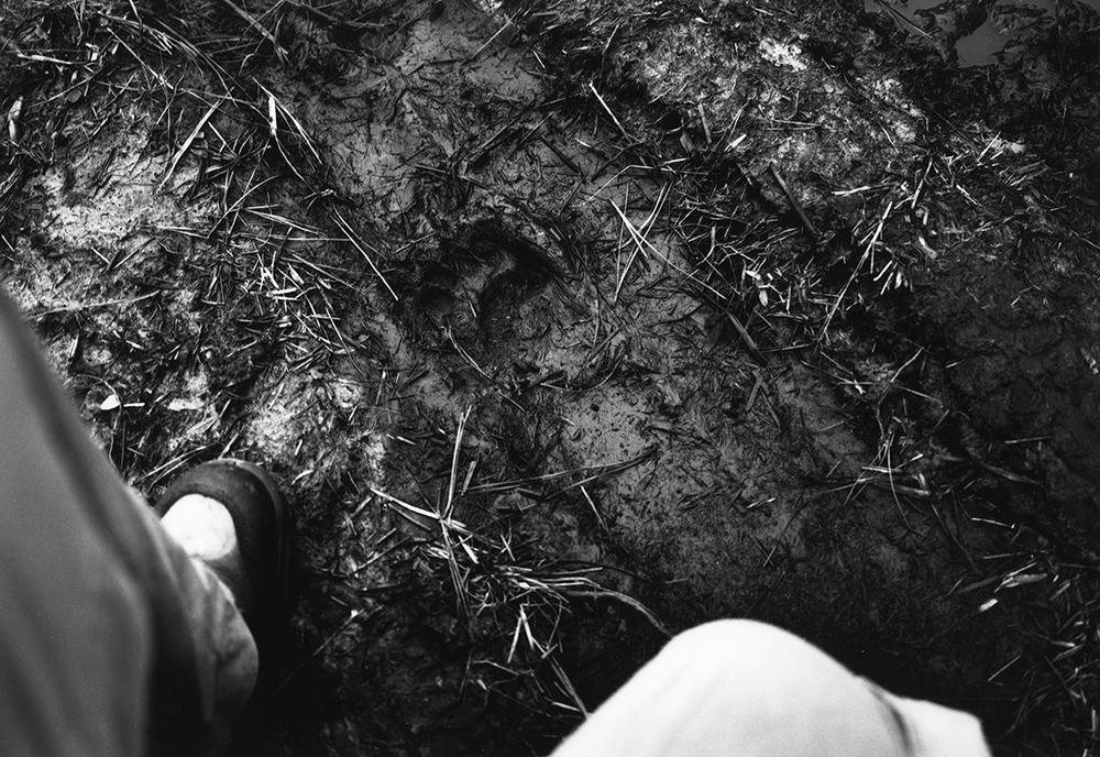 That Slight Nervous Feeling When Coming Across a Fresh Bear Track