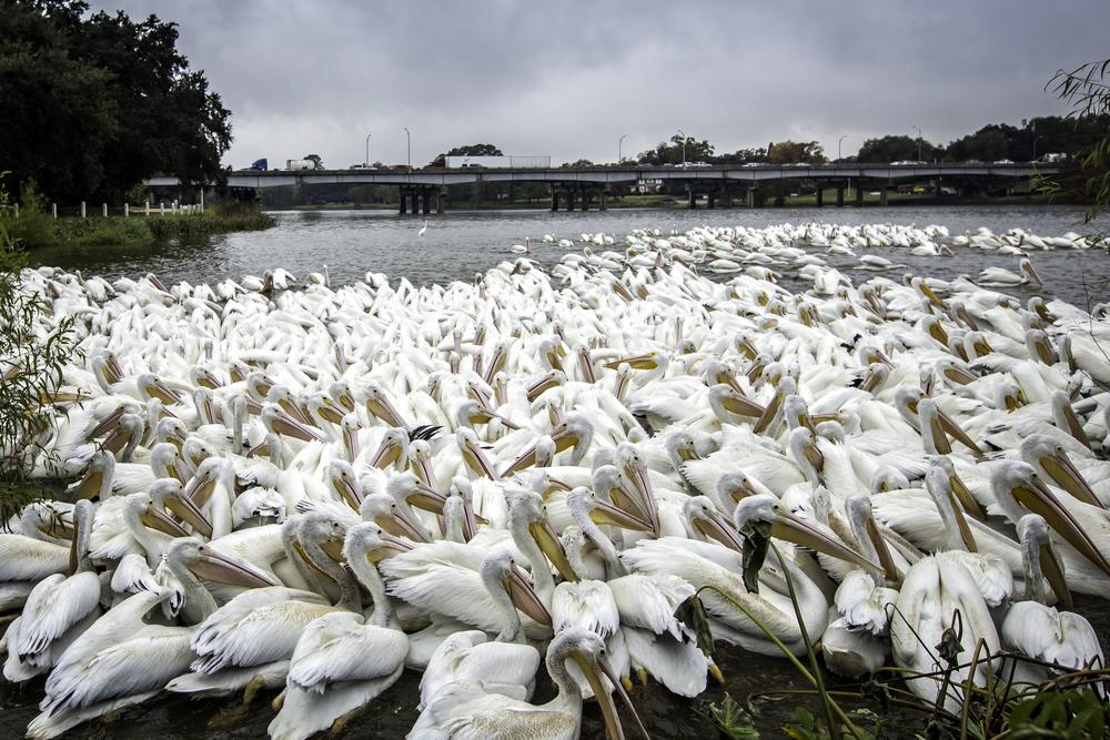20131203_pelicans-58.jpg