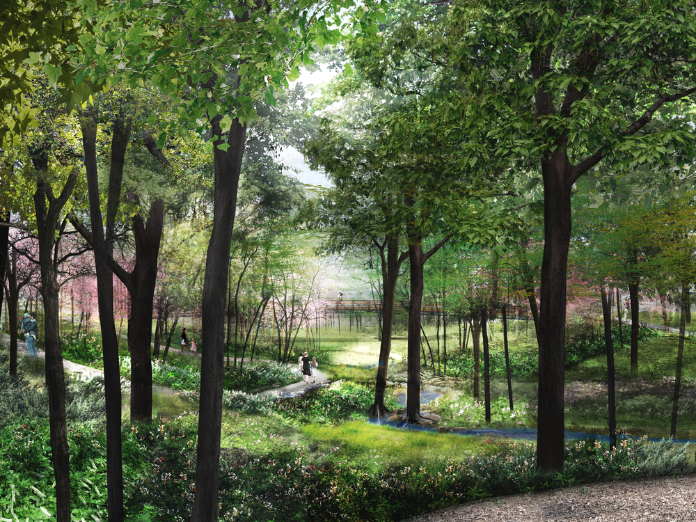 Houston Arbororetum and Nature Center, ravine perspective