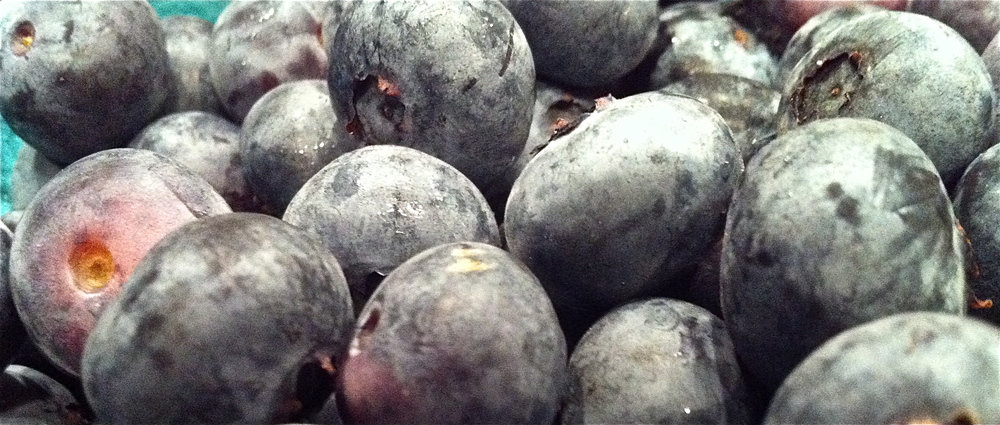 Blueberries2013.JPG