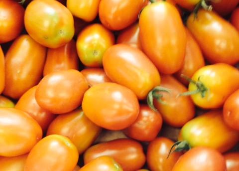 Ripening Plum Tomatoes