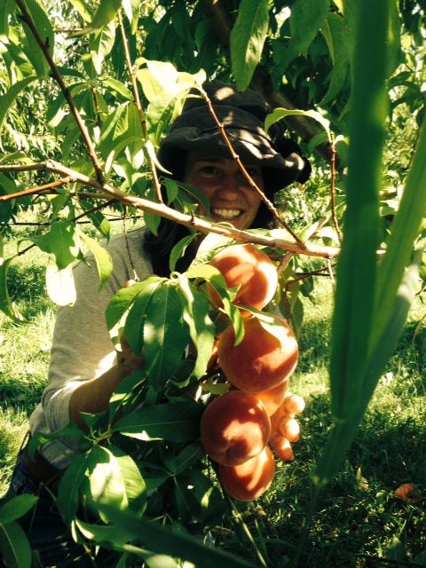 Our Field Manager, Mary, and Peaches Ready to be Harvested!