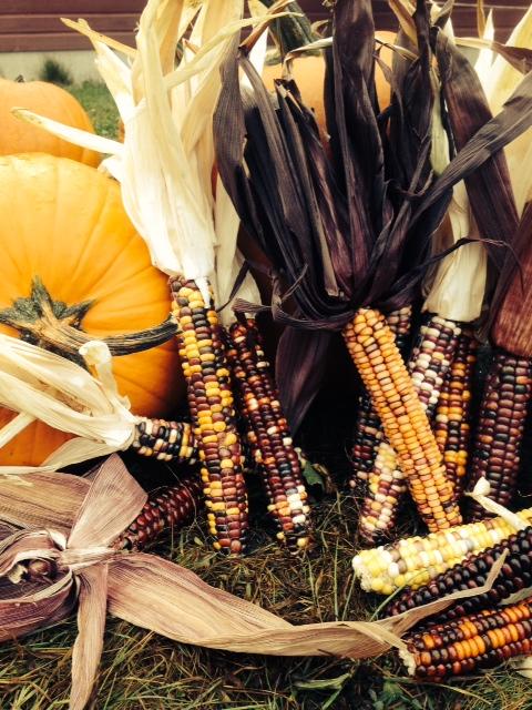Ornamental Corn & Pumpkins
