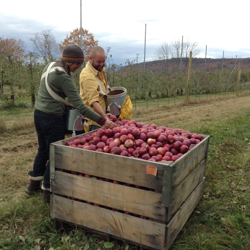 Some of our happy crew harvesting apples this week.