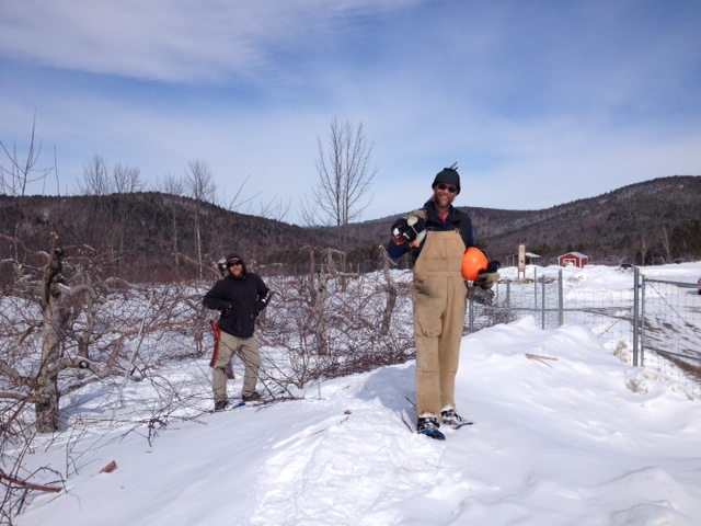 Scott Miller (right) and Patrick McDonald (left) brave the windchill and get some pruning done!