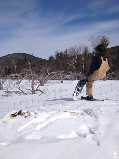 Scott takes a break on our deer fence! The wind has blown the snow to the very top of the 7-foot fence, allowing Scott to walk up to take a break and enjoy the view.