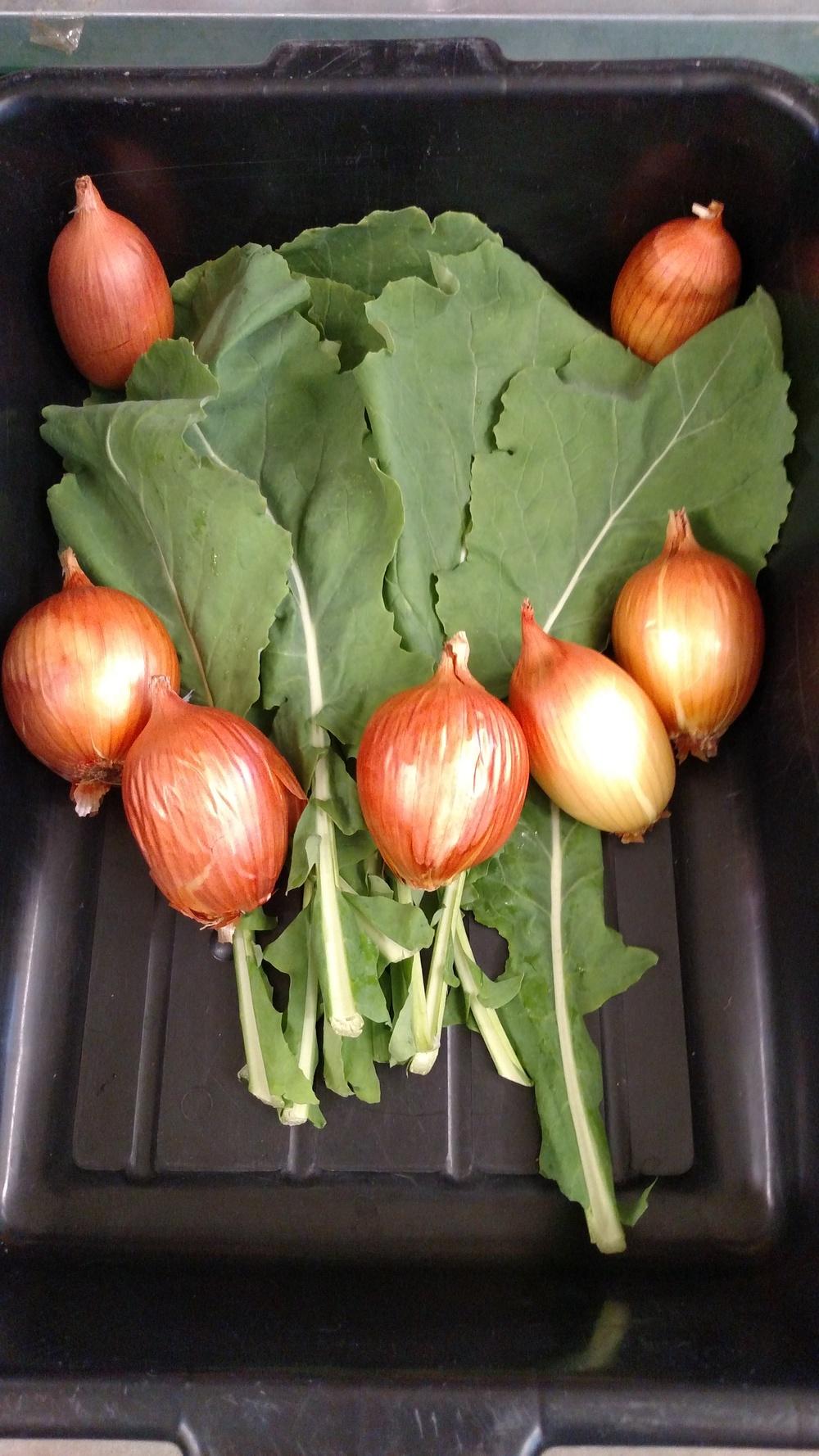 Kale&Onions.jpg