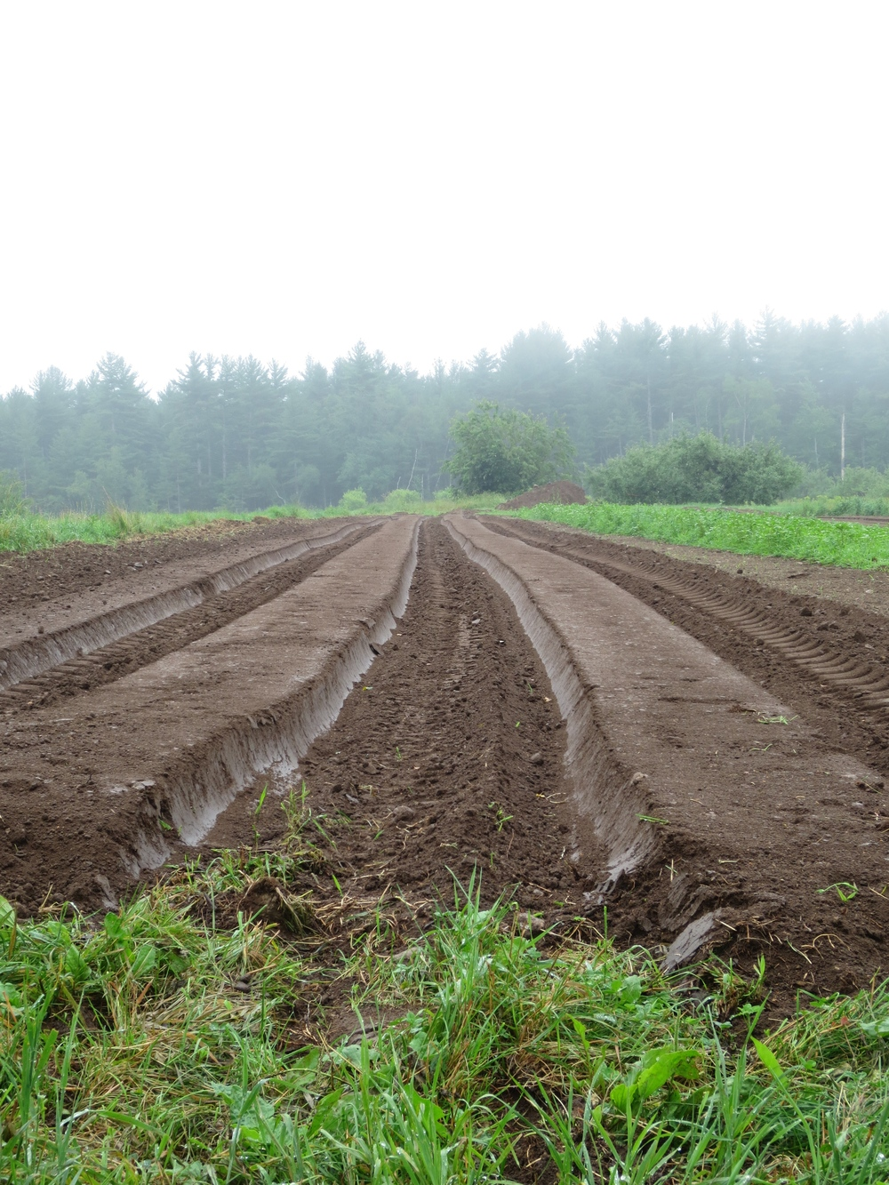 Field prepped and ready for strawberries- a highlight at this year's Open Farm Day.