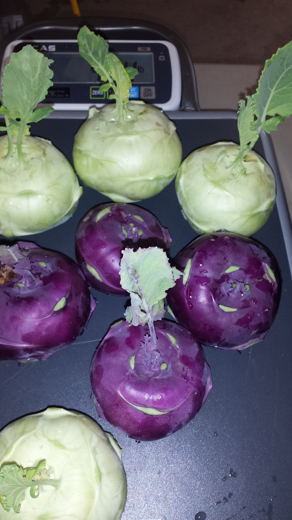Fresh From The Filed This Week! Kohlrabi! Check Out Our  Blog  For Lots Of Kohlrabi Recipes!