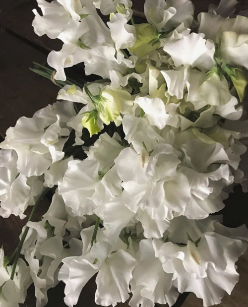 White Frills Ardelia Farm Co Is A Cut Flower Farm And Bakery In