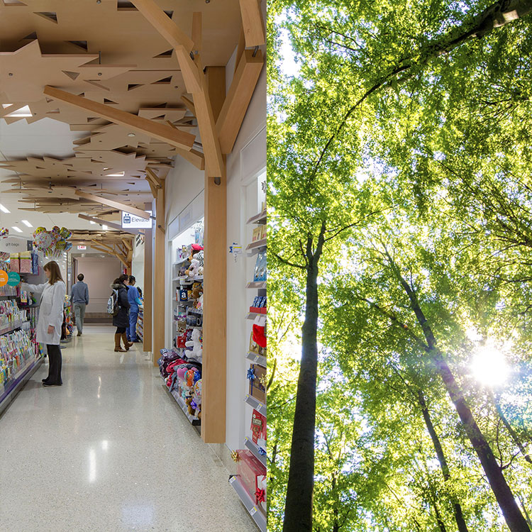 Architectural canopy from Walgreens at Galter Pavilion v. real tree canopy.